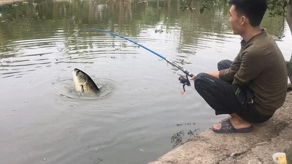 Mơ câu được cá trắm
