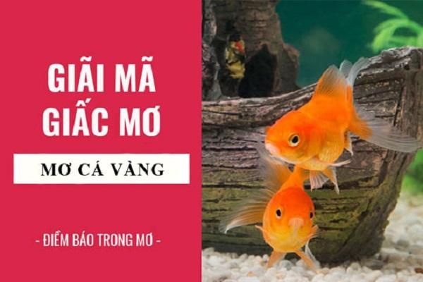 Giải mã giấc mơ cá vàng