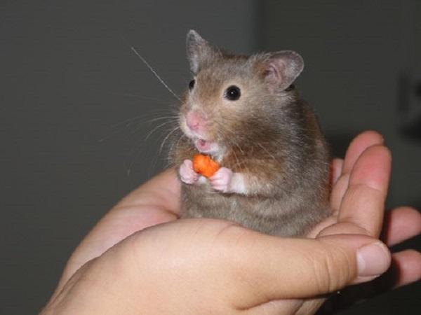 Mơ chuột con điềm báo gì?