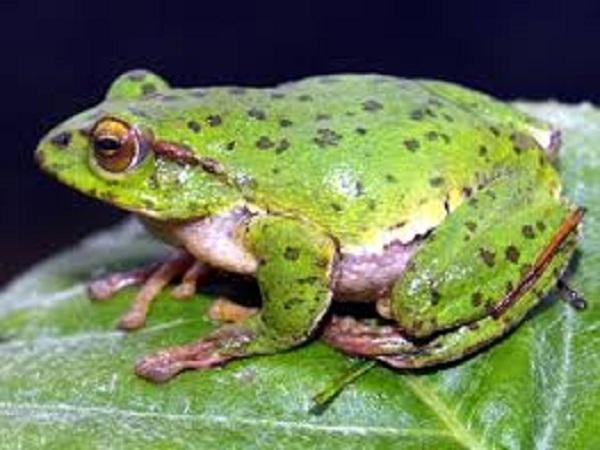 Mơ thấy ếch điềm báo gì?
