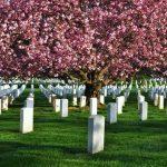 Giải mã giấc mơ thấy nghĩa địa là điềm báo trước gì