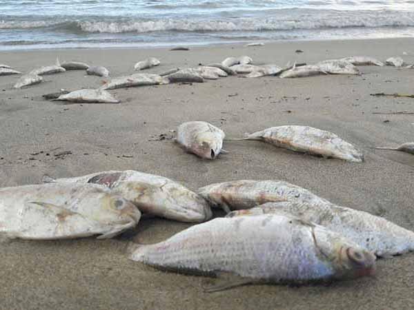 Mơ thấy cá chết là điềm hung hay cát? Cá chết số mấy?
